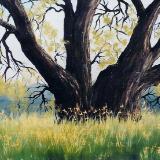 """Danville Oak  10x10""""  oil on canvas   SOLD"""
