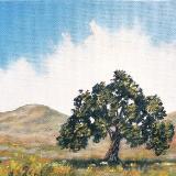 "Lone Oak  5x7""  oil on canvas SOLD"
